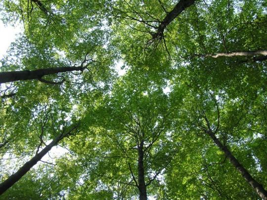 Aby boli lesy odolnejšie