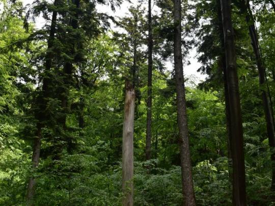 Názor: Zmena v myslení nastala aj u lesníkov a lesných robotníkov, ale akosi to mnohí nechcú vidieť