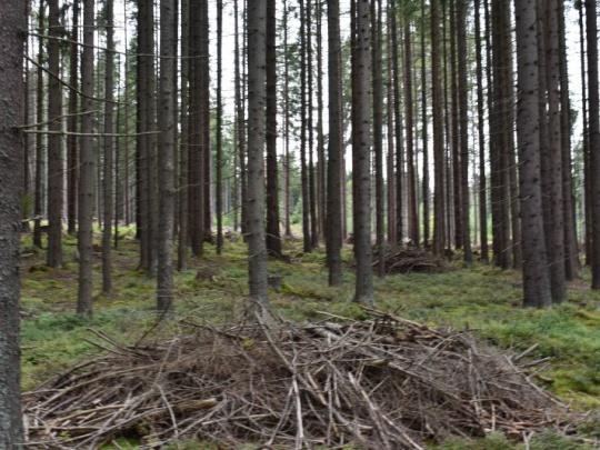 Mestské lesy Tisovec: z dreva by sme sotva vyžili