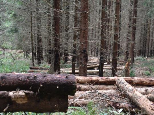 Lesníci nenechali nič na náhodu. Ťažobnej uzávere povedali nie