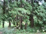 Tip na výlet: Lesnícke arborétum Kysihýbel