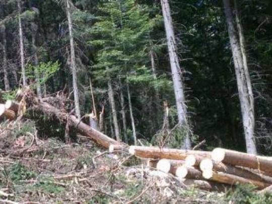 Žiadajú premiéra, aby zabránil likvidácii ihličnatých lesov