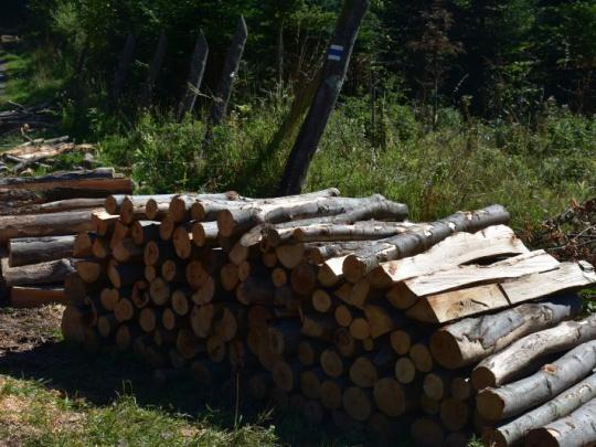 Analytik: Objektívne zadefinujme záväzné podmienky pre udržateľnú produkciu drevnej hmoty na energetické účely