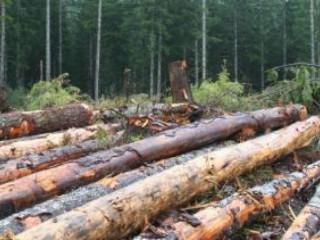 Elektronické aukcie dreva pokračujú