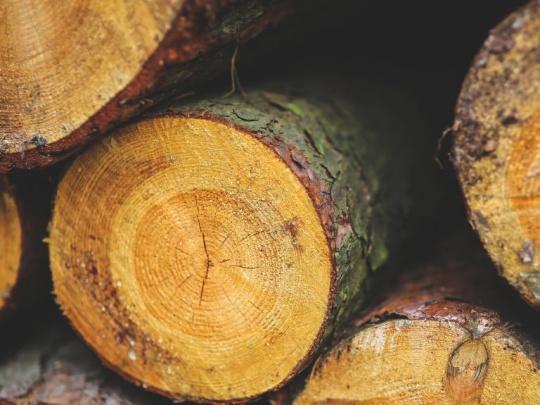 Poslanci schválili zákon o dreve