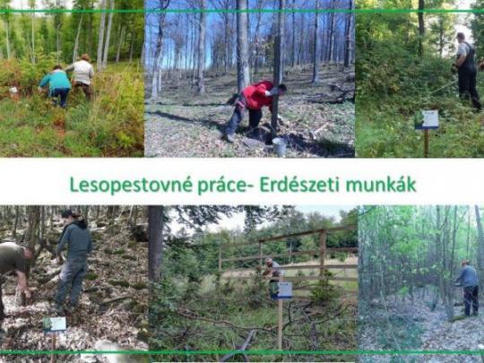 Ďalšie prehĺbenie spolupráce medzi slovenskými a maďarskými lesníkmi: Pomohli prirodzeným lesom