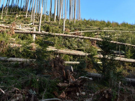 Klíma, kalamitné drevo a koronakríza znižujú zisky Rakúskych štátnych lesov (ÖBf)