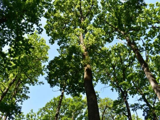 Priaznivá lesnícka bilancia za rok 2019 na Slovensku: ťažba klesla a bola nižšia ako ročný prírastok dreva, lesnatosť stúpla a zásoby dreva sú najvyššie v histórii