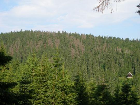 Novela zákona vyvolala u vlastníkov lesov husiu kožu