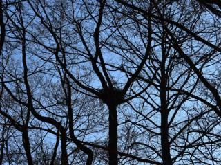 Glosa: Ornitológovia v poslednej chvíli ratovali hniezdo orla, o ktorom lesníci nevedeli. Prečo?!