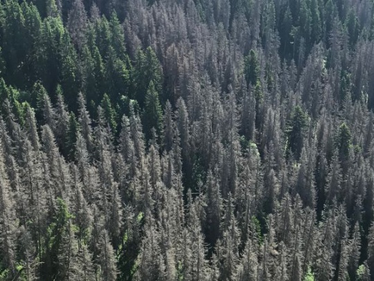 Aktuálne o tragédii lesov v Bobrovci