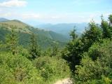 Lesníctvo je nástroj boja proti klimatickým zmenám
