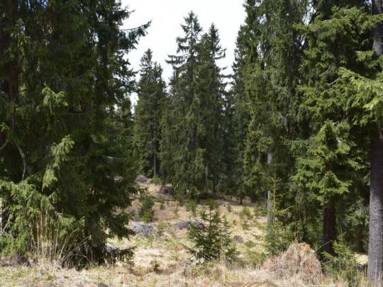 """Otvorený list lesníkov riaditeľovi Správy Národného parku Muránska planina: """"Keď si zo zákona o ochrane prírody a krajiny robíte trhací kalendár!"""""""