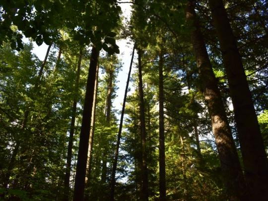 Všimli sme si: Klimatológ o lesoch bez lesníkov. Ale, aké prekvapenie - zhoduje sa s ochranármi