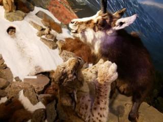 Štátni lesníci avizujú v Múzeu TANAP-u po znovuotvorení viaceré novinky