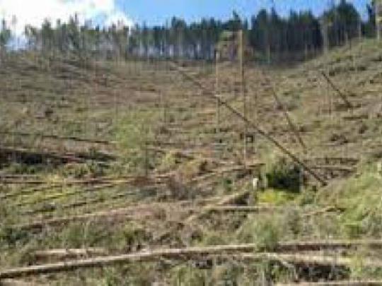 ÚNIA o lesoch a kalamitách: Európska únia má dvojaký meter?