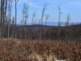Vlastníci lesov protestujú proti aktuálnemu postupu štátu, ktorý ich poškodzuje: je to hanba!