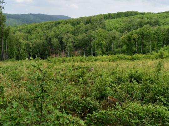 Agrorezort navýšil financie pre obhospodarovateľov lesov na 8 miliónov eur, pripravuje výzvu na ďalších 8 miliónov eur