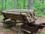 Názor: Najvnímavejší k lesu a prírode sú vidiečania