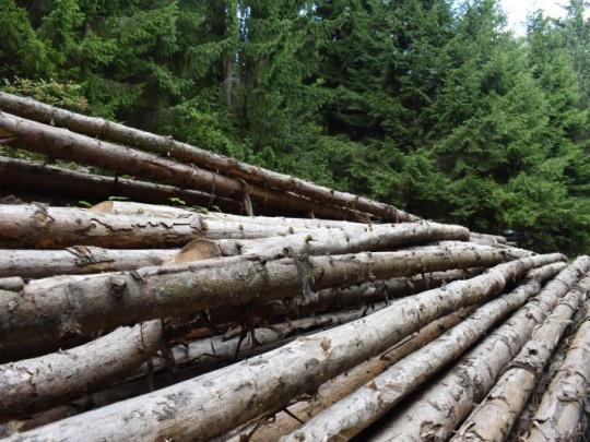 České lesníctvo dostane tento rok kvôli kalamite o 7 miliárd viac