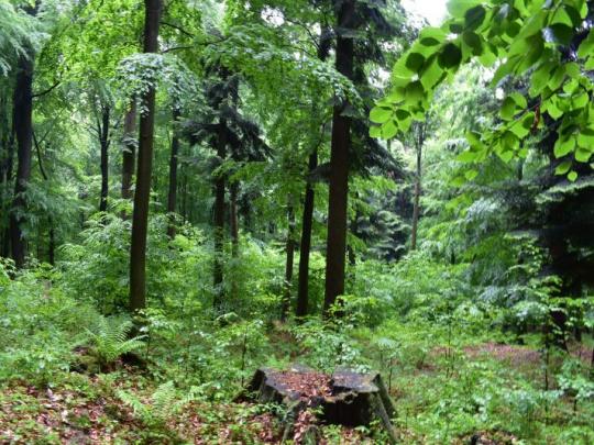 Dažďový prales mizne v Brazílii rekordnou rýchlosťou