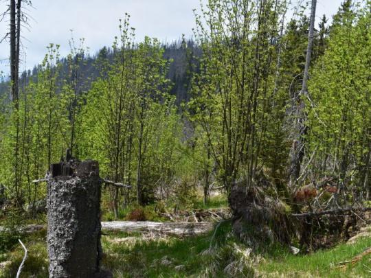 Organizátori petície za záchranu lesov chcú získať 100 000 podpisov