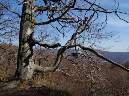 Zádrhely v rokovaniach o Karpatských bukových pralesoch pokračujú