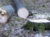 Monitoringom proti krádežiam dreva