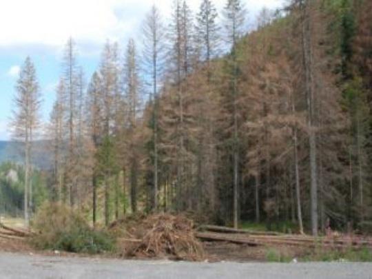 Lesy SR prispeli na opravu cesty