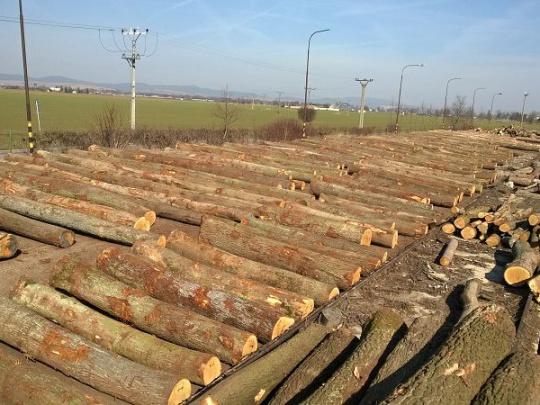 Elektronické aukcie dreva