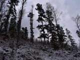 Ako postupovať pri obmedzení bežného obhospodarovania lesov a pri nárokoch na úhradu zvýšených nákladov