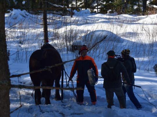 Agrorezort: Tvrdá práca lesníkov si zaslúži rešpekt