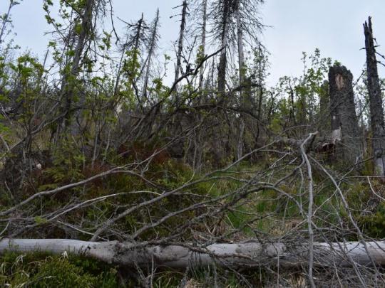 Fabova hoľa: Bijú sa tu zákony a odskáče si to lesník