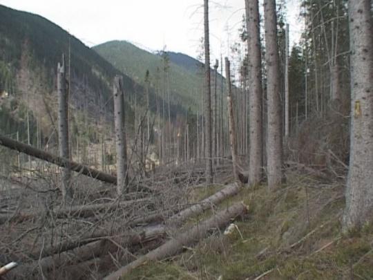 Dve spomienky na veľkú tatranskú kalamitu: Desiatky podnetov proti lesníkom, ktoré prírode nepomohli a ujmy, ktoré vlastníkom a užívateľom lesov nikto nikdy nezaplatí