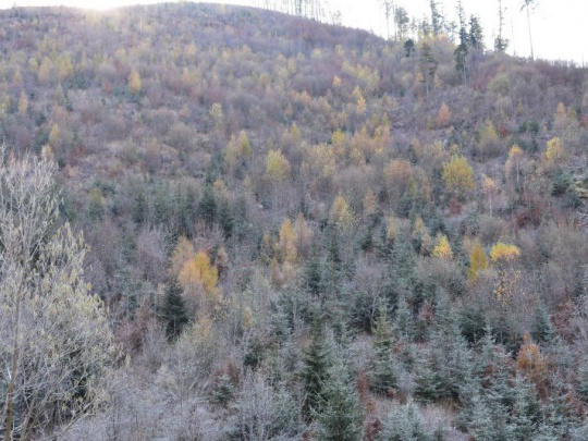 Komentár: O pseudoplantážach a lesníckom úsilí