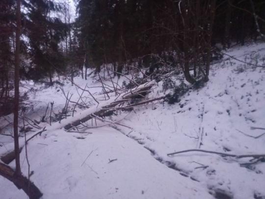 Novelizovaná legislatíva v lesníckej praxi: lehoty a ohrozenia