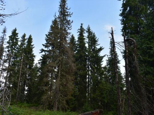 Inšpekcia životného prostredia dala za pravdu lesníkom