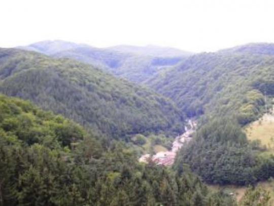 Obnovia poškodené lesy v pohraničí