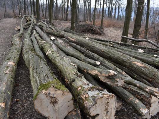 Negatíva vývozu dreva zo Slovenska sa darí znižovať, tvrdí agrorezort