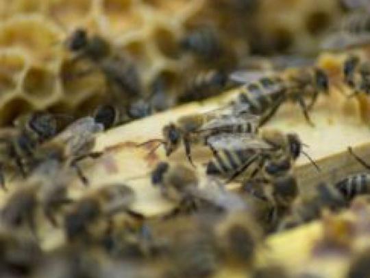 Keď lesníci včelária
