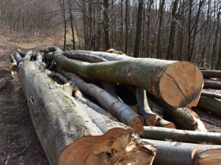 Vedci začali pracovať na pestovaní dreva v laboratórnych podmienkach