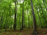 Reakcia na článok o pralesoch a hospodárskych lesoch: žiadny strom predsa nerastie do neba!
