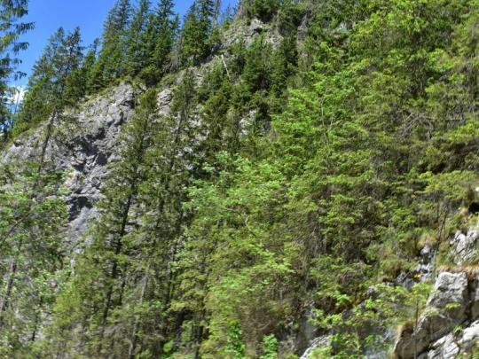 Štátni lesníci vo Vysokých Tatrách nerobia naschvály. Chránia životy a zdravie návštevníkov