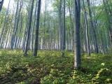 """Dočká sa """"bradatá"""" kauza Slánskych lesov vôbec niekedy na súde záverečných rečí...?"""