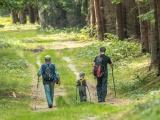Fotografie, ktoré objavujú les