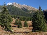 Štátne lesy TANAP-u: Les by mal ostať aj naďalej zelený