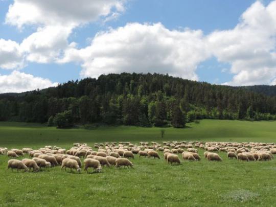 Európa Karpát: Podpora Európskej zelenej dohode a diskusia o Stratégii Európskej únie pre lesy