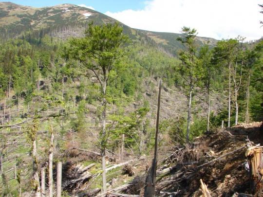 V českých lesoch svieti červená. Na čoraz väčšom území