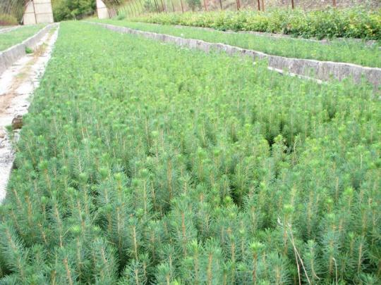 Na zmenu klímy vhodnými semenami a sadenicami
