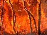 Nebezpečenstvo lesných požiarov je čoraz väčšie. Príklad zo zahraničia, ako mu treba čeliť